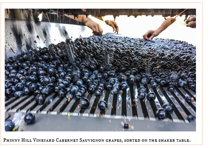 Phinny Hill vineyard cabernet sauvignon grapes, sorted on the shaker table