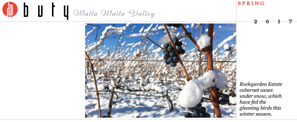 Rockgarden Estate cabernet canes under snow, which have fed the gleaning birds this winter season.